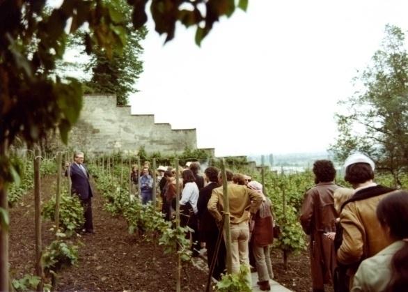 wijnproeven in de wijngaarden van Slavante van Frits Bosch