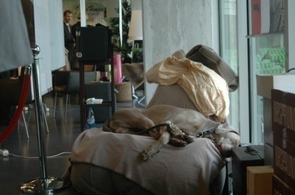 Pingus in diepe slaap tijdens Lourens Event in de Euroborg