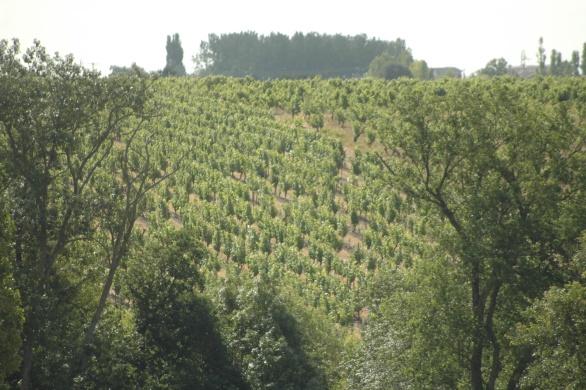 Nu is Stéphane in het bezit van 2,5 hectare verdeeld over drie regio's. De witte Chenin voor Les Nourrissons VV Centenaires (1500 flessen) bevindt zich in Aubigné sur Layon, Les Sables (1300 flessen) in Thouarcé en Les Terres Blanches (1300 flessen) in Cornu. De wijngaarden voor Gamay, Grolleau en Cabernet Sauvignon voor Les Vrilles (800 flessen) en La Chantelée (1000 flessen) liggen ook in Thouarcé.